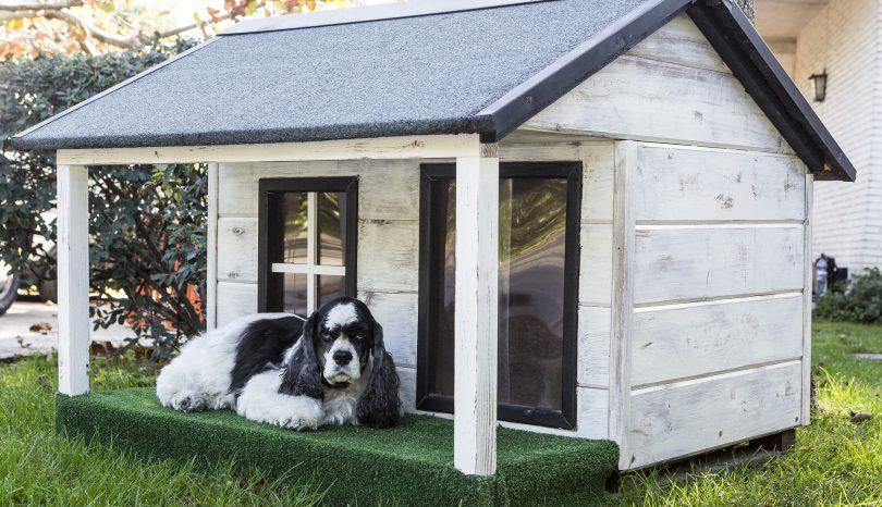 Der Hundeplatz und die Huta