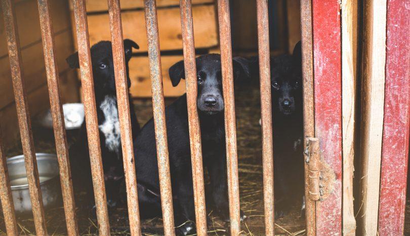 Einen Hund aus dem Tierheim adoptieren